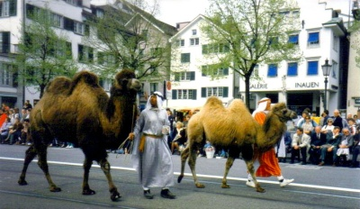 Switzerland-Zurich-Camels