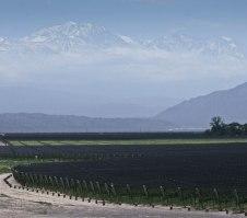 Finca Decero Vineyard, Mendoza, Argentina