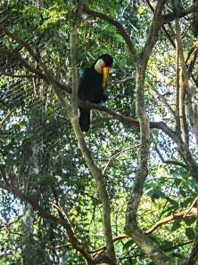 Güira Oga, Puerto Iguazú, Argentina
