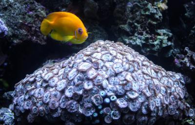 Seattle Aquarium, Seattle, Washington