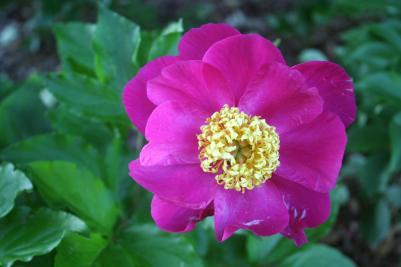 Missouri Botanic Garden, St. Louis, Missouri
