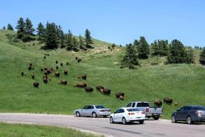 Wildlife Loop Road, Custer State Park, South Dakota