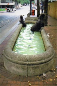 Seals in a Bathtub, Portland, Oregon
