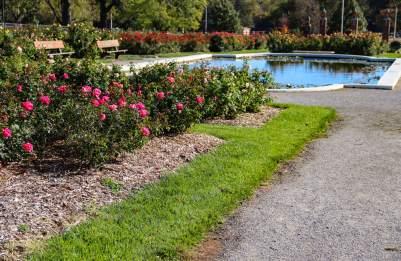 Reinisch Rose Garden, Gage Park, Topeka, Kansas