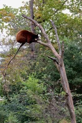 Bear, Topeka Zoo, Gage Park, Topeka Kansas