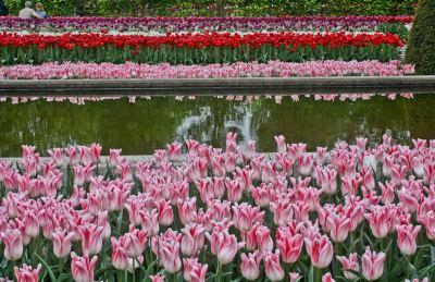 Tulips, Keukenhof, Lisse, Netherlands