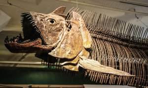 Museum of World Treasures, Wichita, Kansas